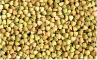 Гречка зеленая (ядрица) для проращивания (0.5 кг)