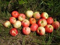 Уксус яблочный домашний из экопоселения (500 мл)