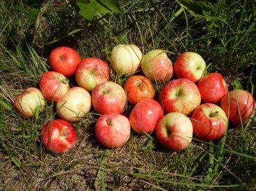 Фото Уксус яблочный домашний из экопоселения (500 мл)